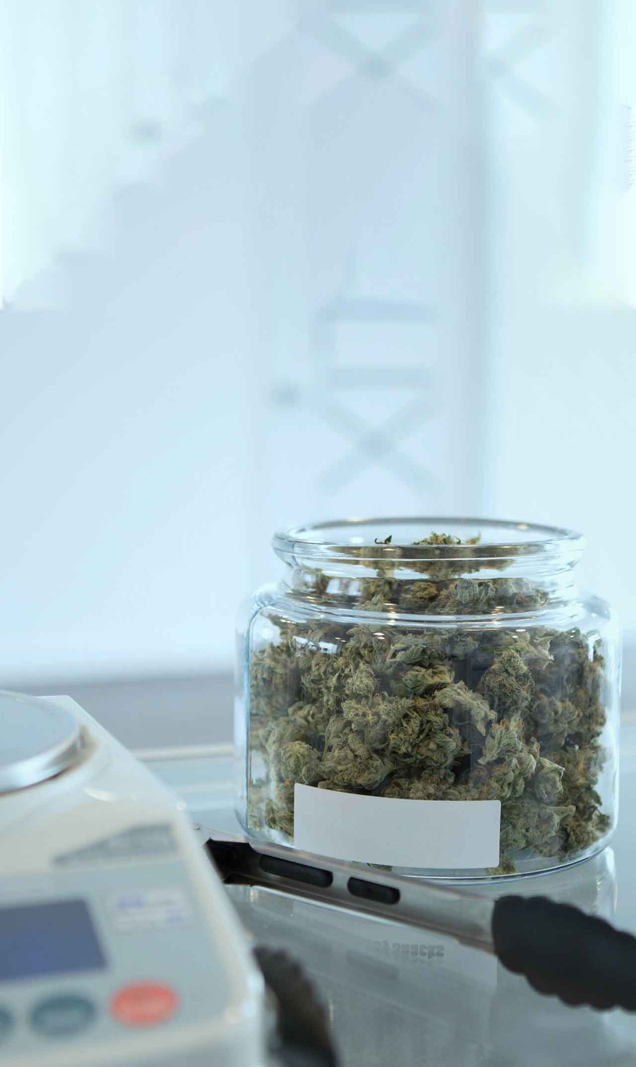Bottle filled with Marijuana buds