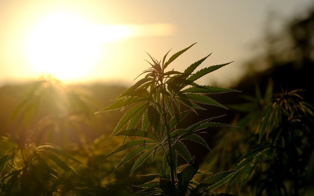 What You Should Know About Sourcing Hemp Products