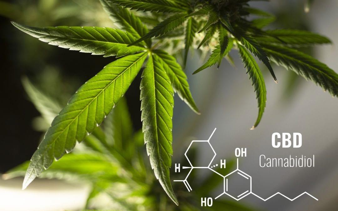Can Cannabis Help My Chronic Pain???
