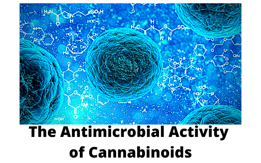 The Antimicrobial Activity of Cannabinoids